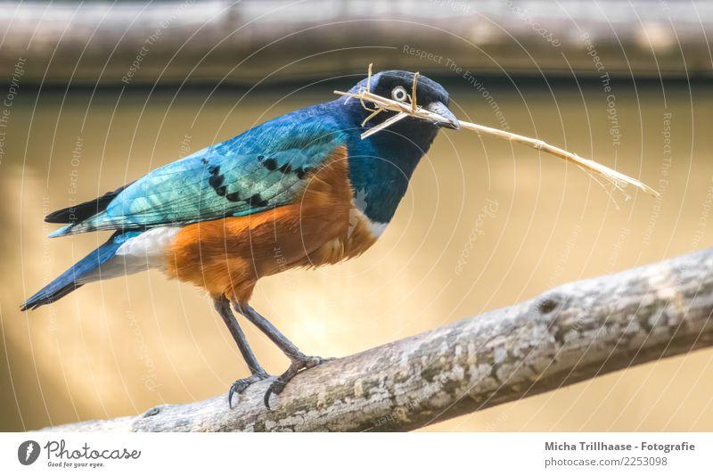Bunter Star Natur blau weiß Sonne Baum Tier schwarz gelb Umwelt Auge Vogel orange leuchten Wildtier Feder Schönes Wetter
