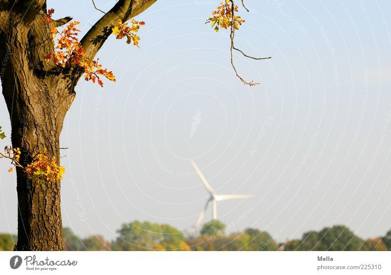 Öko Himmel Natur blau Baum Pflanze Blatt Landschaft Umwelt Energie Klima Energiewirtschaft Zukunft Sauberkeit Windkraftanlage Baumstamm ökologisch