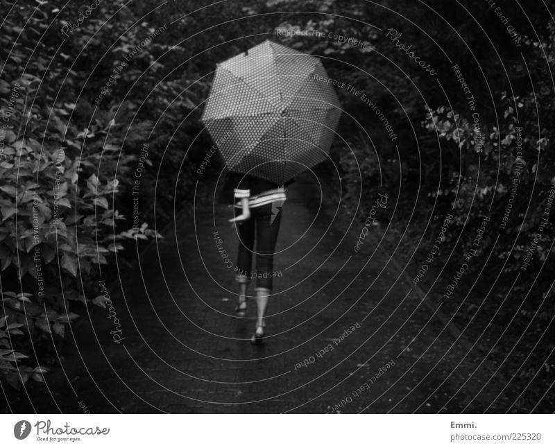 tanz davon Mensch Jugendliche Blatt Erholung Leben feminin Wege & Pfade Glück gehen elegant laufen frei Fröhlichkeit Junge Frau Sträucher Regenschirm