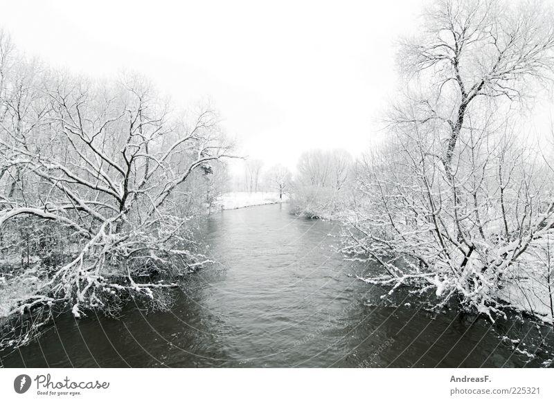 Grau in Grau Umwelt Natur Landschaft Wasser Winter Wetter schlechtes Wetter Nebel Eis Frost Schnee Baum Sträucher Fluss Spree kalt grau Außenaufnahme