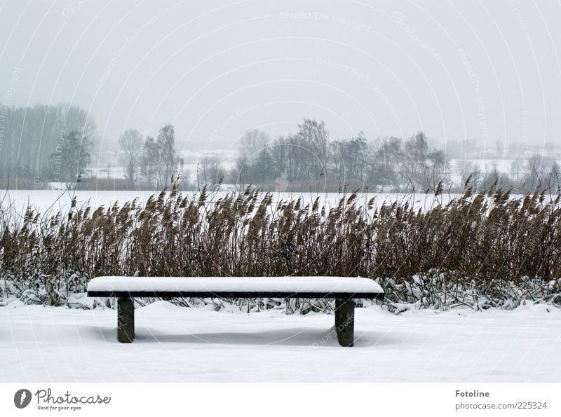 Sehnsucht nach Sommer!!! Umwelt Natur Landschaft Pflanze Himmel Wolken Winter schlechtes Wetter Eis Frost Schnee Baum Seeufer kalt natürlich weiß Schilfrohr