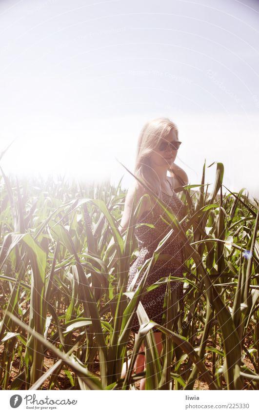 SUMMER Mensch feminin Junge Frau Jugendliche Freundschaft Leben 1 Natur Landschaft Himmel Wolkenloser Himmel Sonnenlicht Sommer Grünpflanze Feld blond