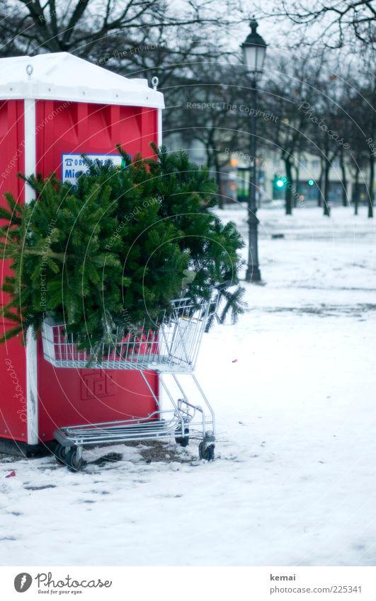 Knut Tradition schlechtes Wetter Eis Frost Schnee Pflanze Baum Tanne Stadt Menschenleer Toilette Einkaufswagen Laterne Laternenpfahl Straßenbeleuchtung grün