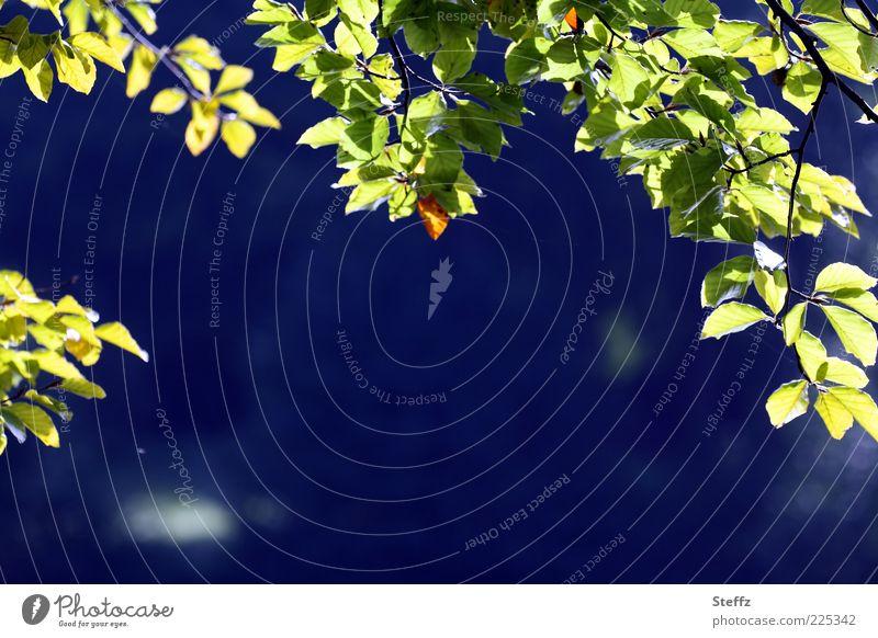 natürliche Kulisse Herbst Blatt Zweig Zweige u. Äste ruhig Lichtstimmung Ferne Stimmung Lichtspiel Hintergrundbild blau-grün hellgrün Jahreszeiten leuchten