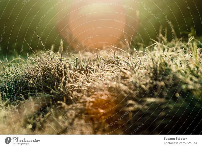 morning glory Natur Sonne Wiese Gras träumen hell Eis Sträucher Frost Schönes Wetter Halm Dürre Raureif Grasnarbe Blendenfleck