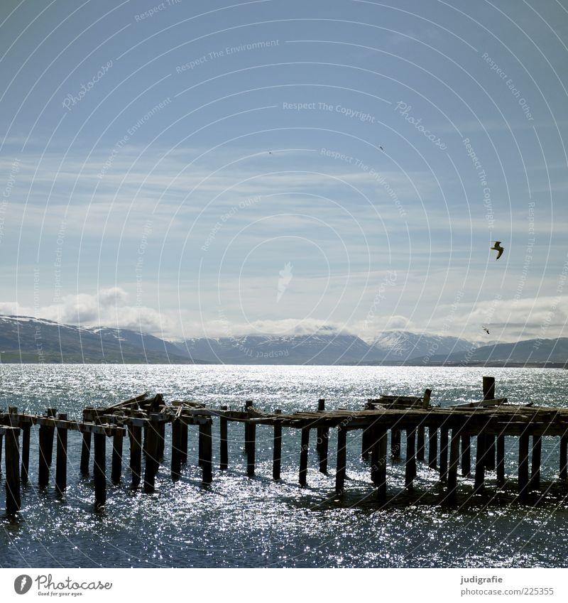 Island Umwelt Natur Landschaft Tier Wasser Himmel Klima Schönes Wetter Berge u. Gebirge Küste Fjord Hjalteyri Hafen Schifffahrt Vogel fliegen leuchten kalt