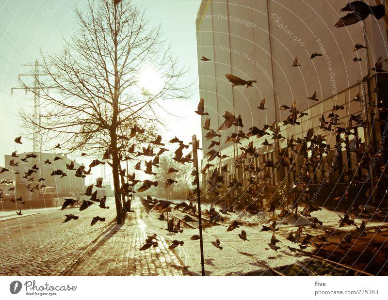 Hamburg Flying Circus Stadt Baum Pflanze Haus Tier Straße Wand Fenster Mauer Gebäude hell Vogel Fassade fliegen Tiergruppe