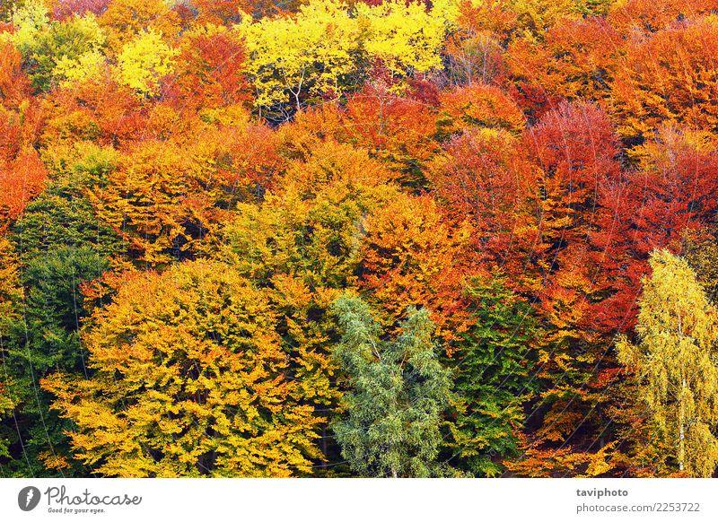 strukturelles Bild des Herbstlaubs schön Umwelt Natur Landschaft Pflanze Baum Blatt Park Wald verblüht hell natürlich braun gelb gold grün rot Farbe Konsistenz