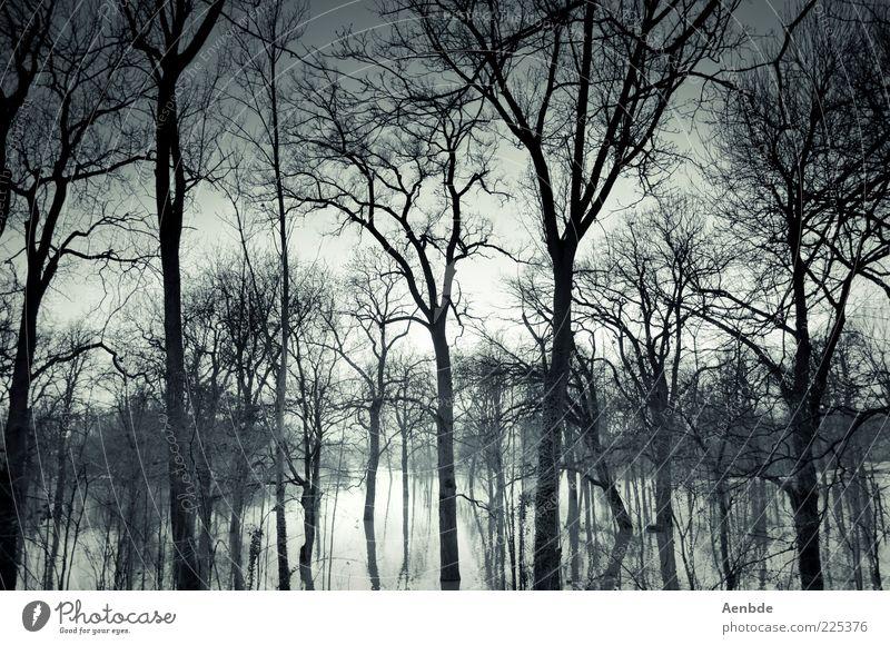 Neverglade Umwelt Natur Landschaft Pflanze Wasser Himmel Klima Klimawandel Baum Wald Stimmung Überschwemmung überschwemmt Farbfoto Außenaufnahme Menschenleer