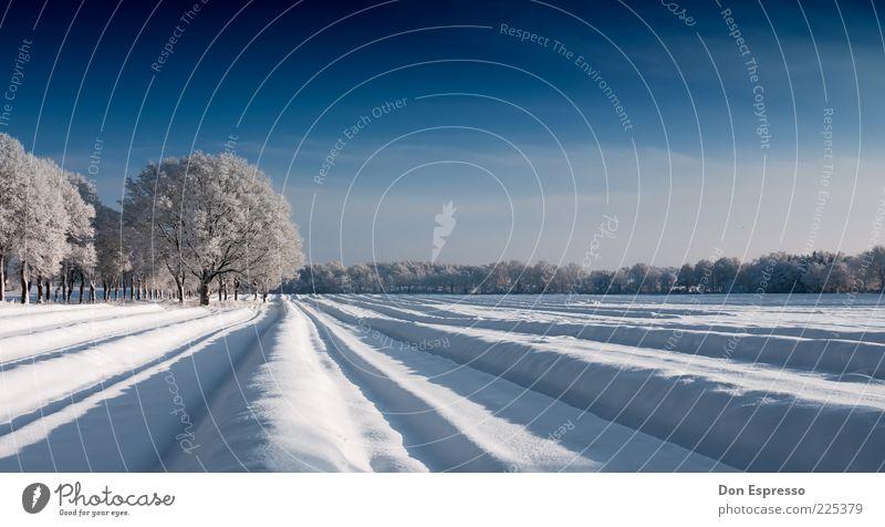 Spargelfeld im Winter Natur Baum ruhig kalt Schnee Umwelt Linie Eis Feld Frost Furche Winterurlaub Wolkenloser Himmel
