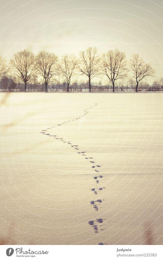 Spuren Ferne Winter Schnee Umwelt Natur Landschaft Himmel Schönes Wetter Eis Frost Baum Feld Wildtier Hase & Kaninchen Abdruck Zeichen Jagd weiß Beginn Freiheit