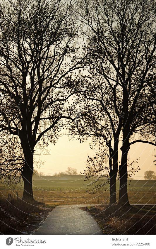 hinterm Baumtor rechts Natur ruhig Einsamkeit Wald Herbst Freiheit Landschaft Umwelt Wege & Pfade Wetter Feld Zufriedenheit Trauer Wandel & Veränderung Ziel