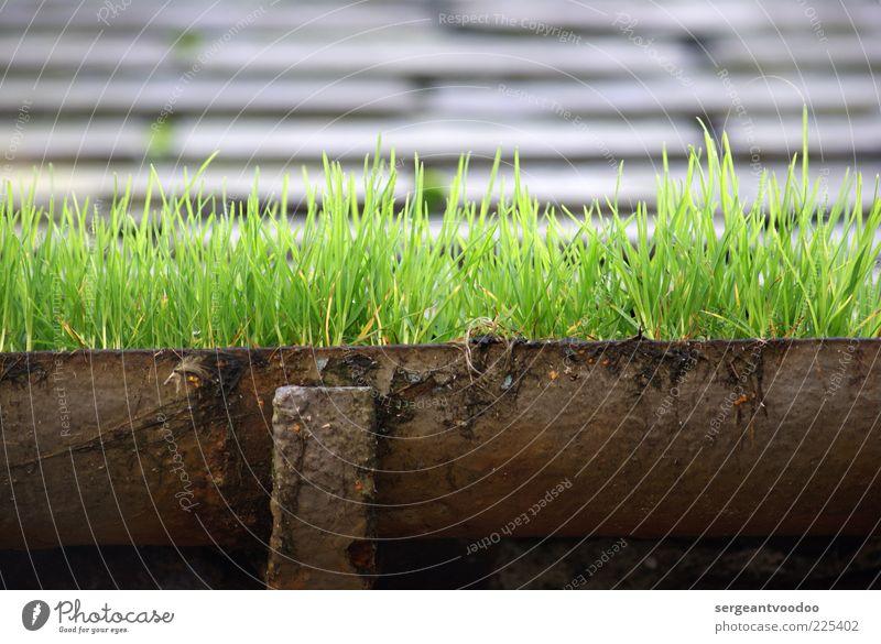 Green, green gras of home Natur alt grün Pflanze Umwelt Architektur Gras Metall Wachstum Dach Urelemente außergewöhnlich Vergänglichkeit Verfall Dachrinne Stein