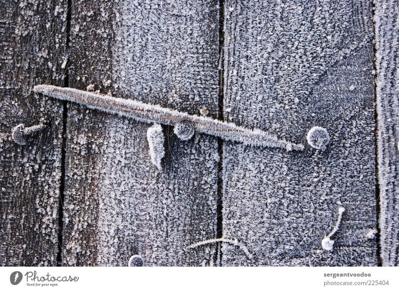 frozen Wood alt weiß ruhig Winter kalt Umwelt grau Holz Metall Wetter Eis frisch ästhetisch Klima kaputt Sicherheit