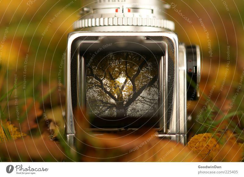 Der Vorgang. alt Baum Gras Stimmung liegen außergewöhnlich Fotokamera Durchblick Sucher Mittelformat Waldboden herbstlich Gefühle