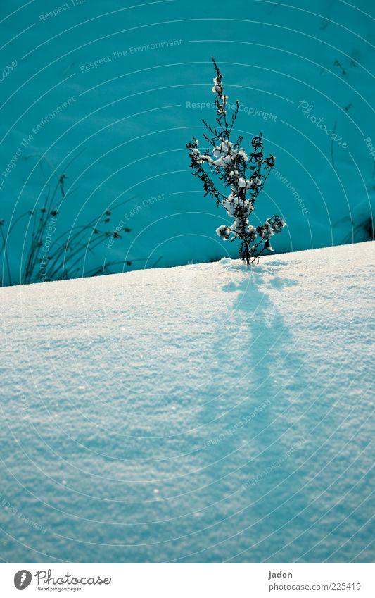 halte durch! Natur Pflanze Winter ruhig kalt Schnee Umwelt trist Sträucher Frost standhaft