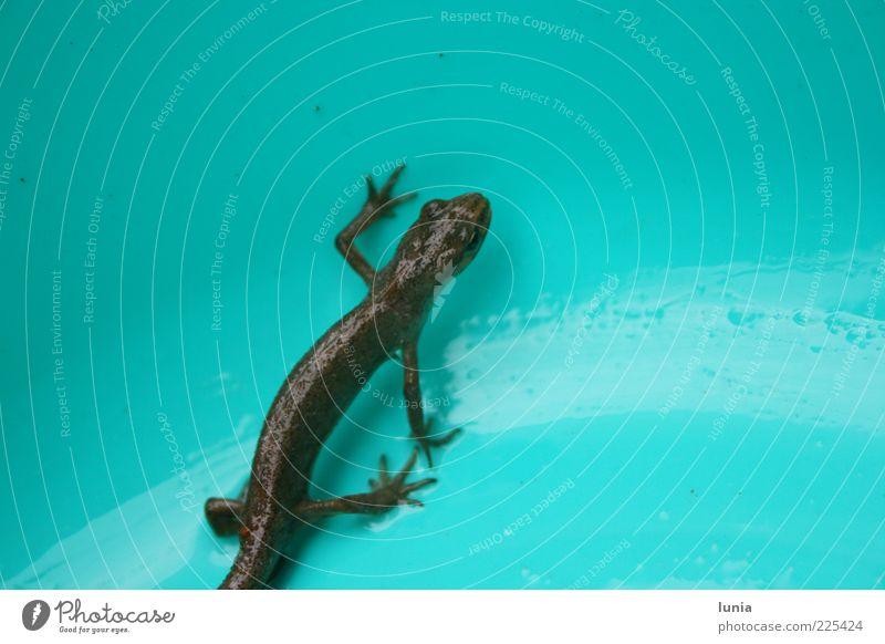 wo geht's lang? blau schwarz Tier klein nass natürlich stehen Wildtier Kunststoff Schalen & Schüsseln Echte Eidechsen