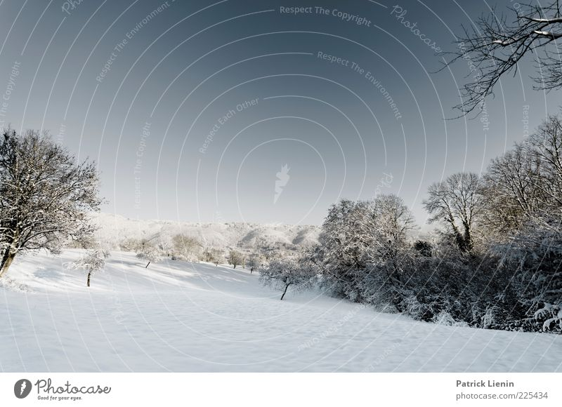 wintertime love Himmel Natur weiß blau schön Baum Pflanze Winter Wald kalt Wiese Schnee Landschaft Umwelt Stimmung Luft