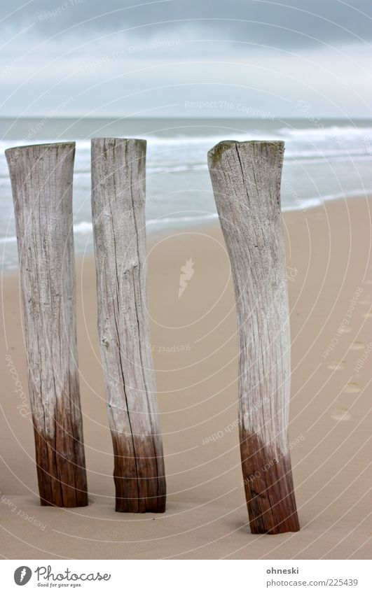 Die Drei von der Sandstelle Landschaft Urelemente Wasser Wetter Küste Nordsee Meer Buhne grau Strand Holz Farbfoto Textfreiraum oben Tag nass feucht Sandstrand