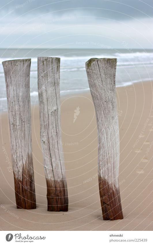 Die Drei von der Sandstelle Wasser Strand Meer Landschaft grau Holz Küste Wetter nass Urelemente Nordsee feucht Buhne Sandstrand