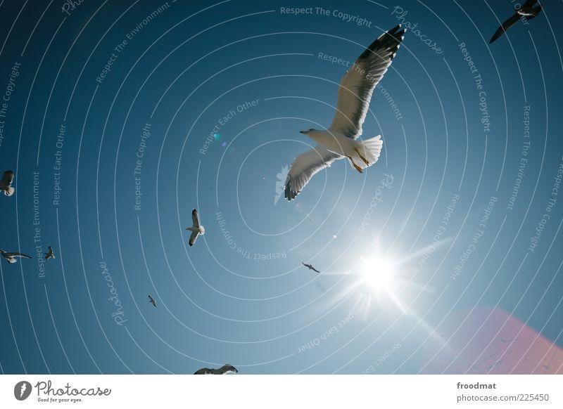 versteht ihr was vom vögeln? Natur Sommer Tier Luft Vogel fliegen frei ästhetisch Tiergruppe Flügel Schönes Wetter Möwe Schwarm Wolkenloser Himmel Möwenvögel Vogelflug