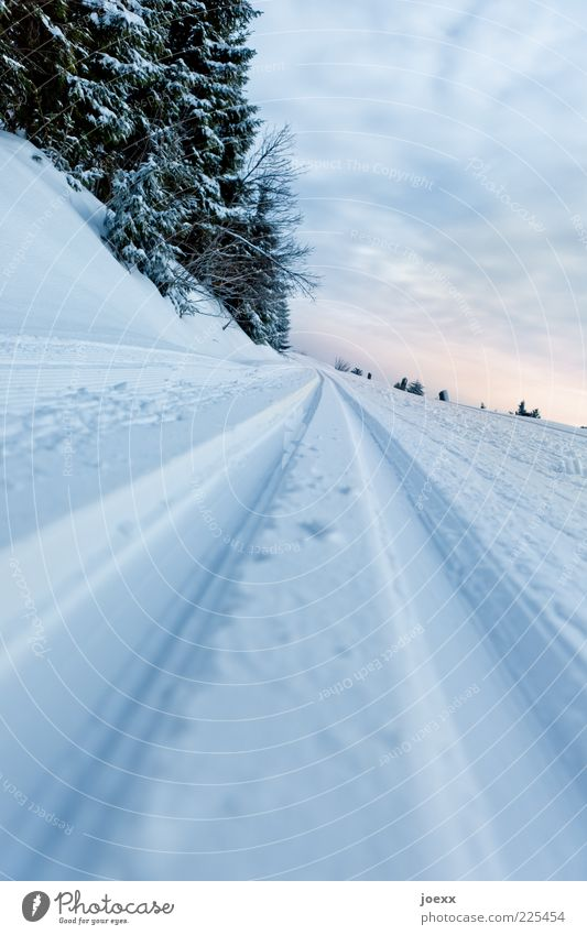 Überholverbot Himmel Natur Baum Wolken Winter kalt Schnee Landschaft Wege & Pfade Skilanglauf Schneespur Loipe