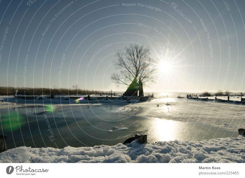 Zempin Natur blau Baum Sonne Winter kalt Schnee Landschaft grau Küste hell See Eis Seeufer Schönes Wetter Ostsee