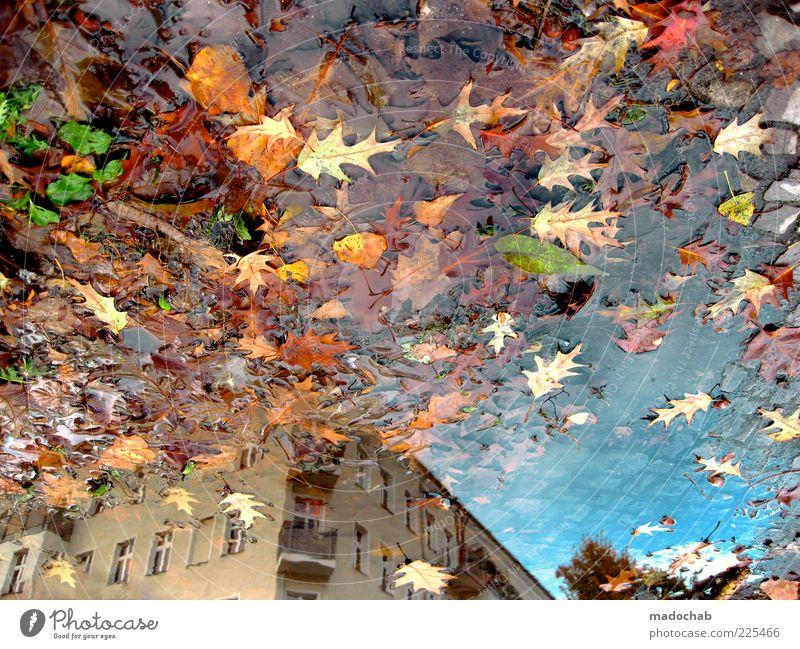 Action Painting Umwelt Natur Wasser Herbst Klima schlechtes Wetter Regen Haus Gebäude Architektur ästhetisch chaotisch Blatt Pfütze Reflexion & Spiegelung