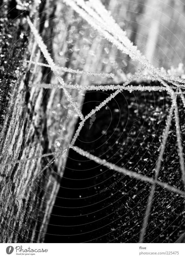 netzwerk II Natur weiß Winter schwarz kalt Holz hell Eis Frost außergewöhnlich Netz Baumstamm Pfosten Eiskristall Spinnennetz