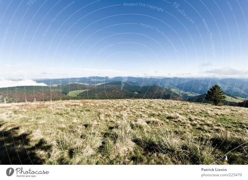 The world is round Himmel Natur blau schön Baum Pflanze Ferne Wald Wiese Berge u. Gebirge Herbst Landschaft Umwelt Gras Stimmung Luft