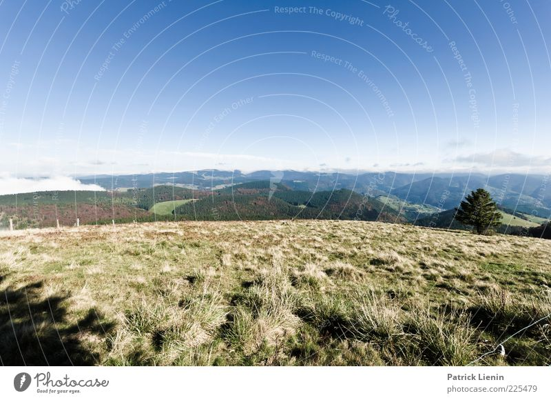 The world is round Umwelt Natur Landschaft Pflanze Urelemente Erde Luft Himmel Wolkenloser Himmel Herbst Klima Wetter Schönes Wetter Baum Gras Wiese Wald Hügel