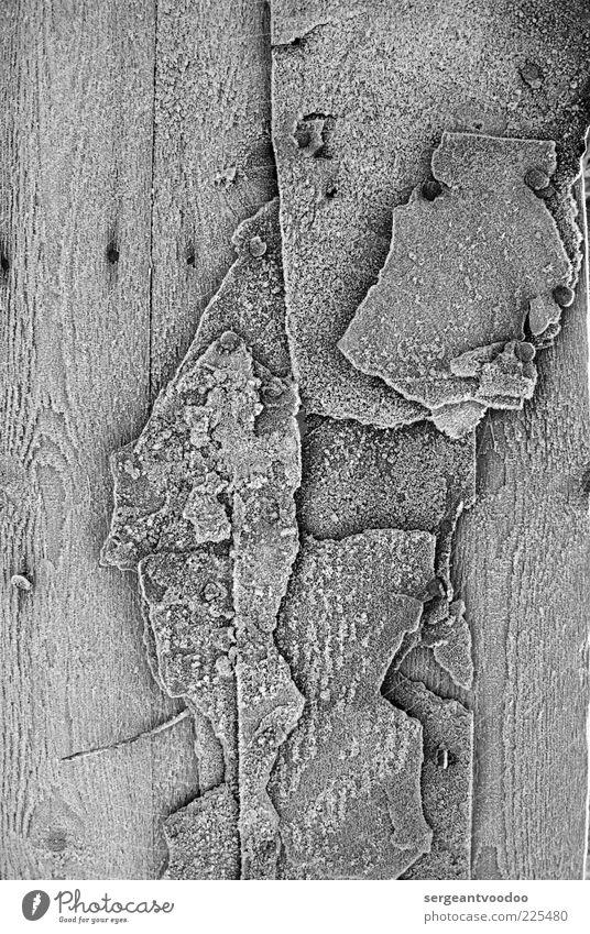frozen Dachpappereste auf Holz Umwelt Winter Klima Eis Frost Hütte Ruine Teerpappe Nagel alt entdecken ästhetisch dreckig hässlich kalt kaputt trashig grau