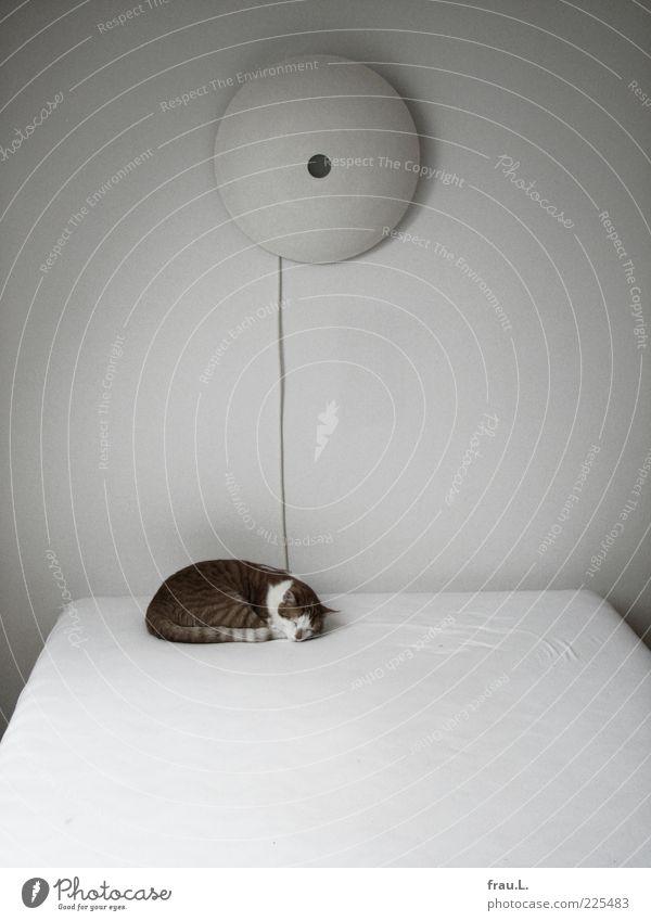 er ruht Tier Haustier Katze 1 schlafen klein niedlich Zufriedenheit Geborgenheit Tierliebe ruhig Hauskatze Tigerfellmuster Bettlaken Gedeckte Farben