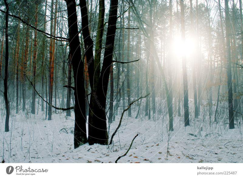 tauwetter Umwelt Natur Landschaft Pflanze Winter Nebel Eis Frost Schnee Baum Wildpflanze Wald kalt Dunst Baumstamm Silhouette Farbfoto mehrfarbig Außenaufnahme