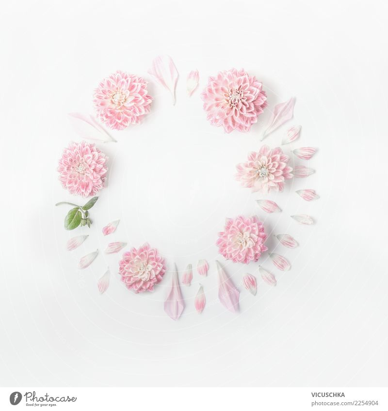 Runder Rahmen von Pastellrosa Blumen weiß Blatt Blüte Hintergrundbild Liebe feminin Stil Feste & Feiern Design hell Dekoration & Verzierung Geburtstag Zeichen