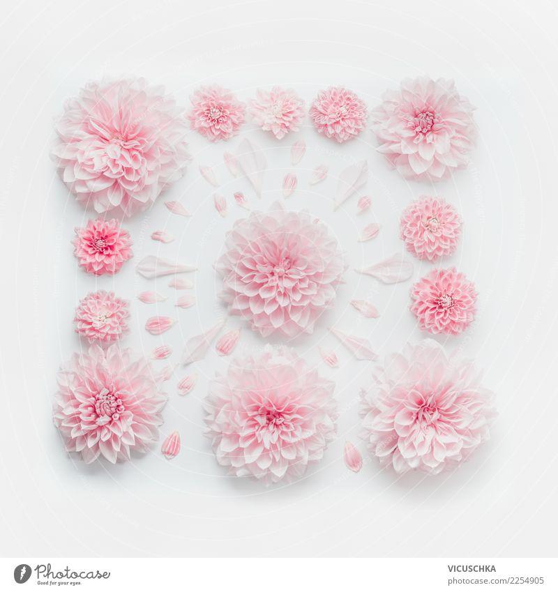 Pastel rosa Blumenkomposition Stil Design Feste & Feiern Valentinstag Muttertag Hochzeit Geburtstag Natur Pflanze Dekoration & Verzierung Blumenstrauß Ornament