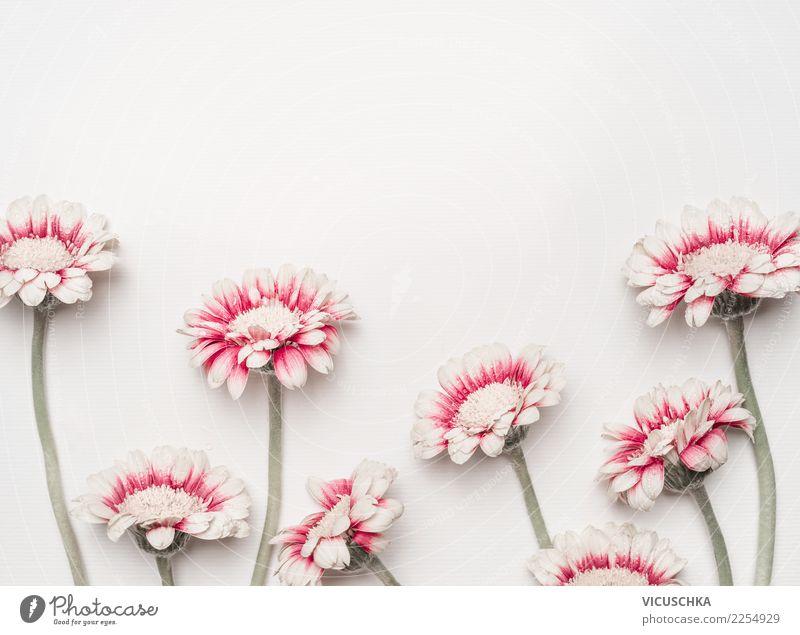 Grußkarte mit schönen rot weiße Blumen Stil Design Freude Schreibtisch Feste & Feiern Valentinstag Muttertag Hochzeit Geburtstag Natur Pflanze