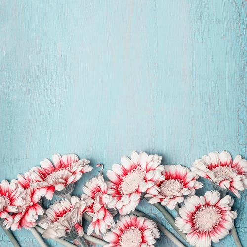 Schöne Blumen auf blue Shabby Chic Hintergrund Natur Pflanze Sommer Hintergrundbild Liebe Stil Feste & Feiern rosa Design Dekoration & Verzierung Geburtstag