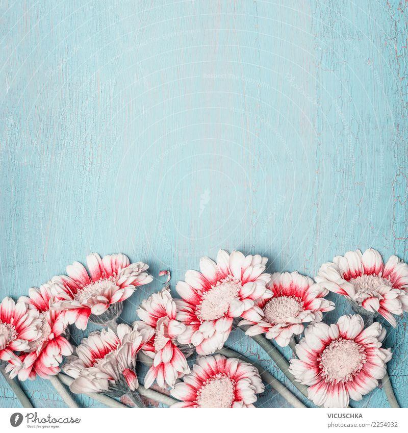 Schöne Blumen auf blue Shabby Chic Hintergrund Stil Design Sommer Feste & Feiern Valentinstag Muttertag Hochzeit Geburtstag Natur Pflanze