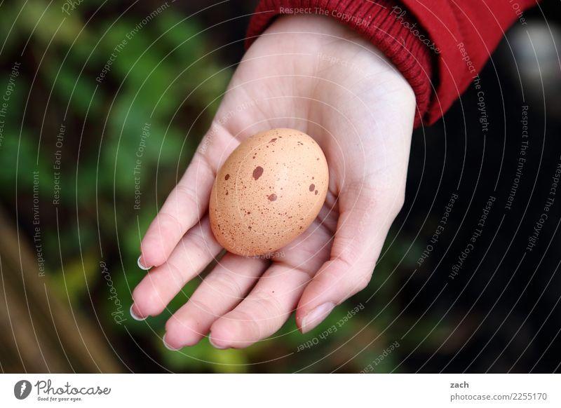Jenseits des Mainstreams | Ostern im Advent Lebensmittel Ei Hühnerei Frühstück Hand Finger Essen grün Farbfoto Außenaufnahme Menschenleer Textfreiraum links