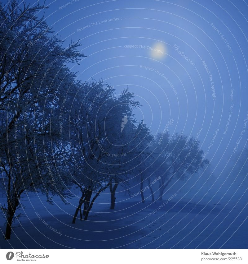Eismond Himmel Mond Winter Klima Nebel Schnee blau Romantik kalt ruhig Raureif Farbfoto Außenaufnahme Nacht Licht Schatten Silhouette Gegenlicht