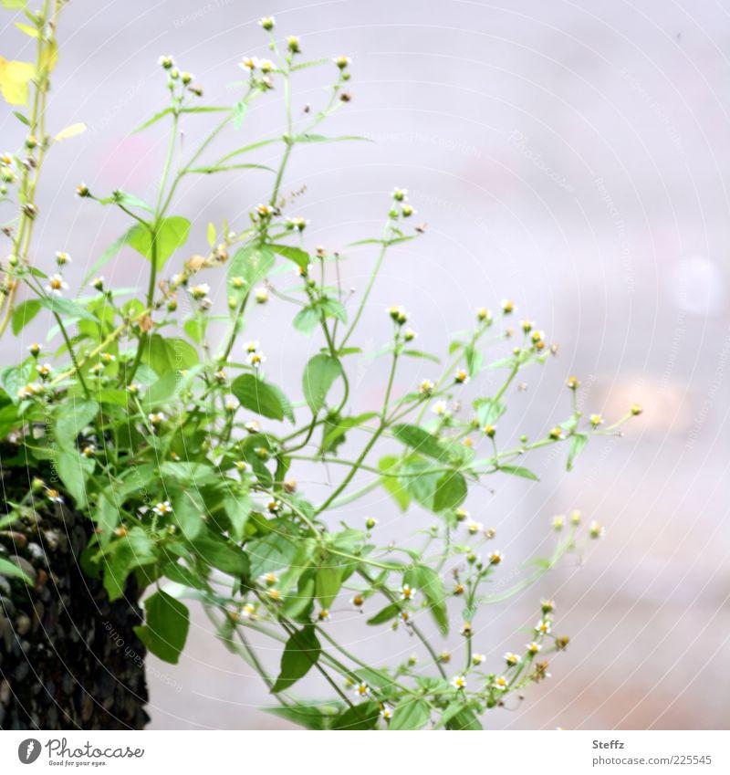 Simplicity Natur grün Sommer Pflanze Blume Blatt Umwelt grau Blüte hell natürlich Dekoration & Verzierung Sträucher einfach verschönern Grünpflanze