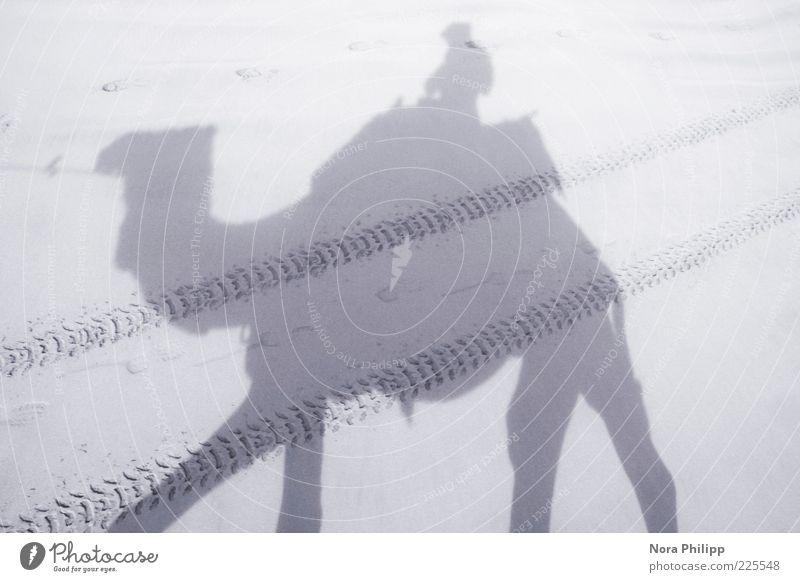 Dromedar Trip Mensch Natur Sommer Ferien & Urlaub & Reisen Ferne Freiheit Umwelt Sand Wärme Ausflug Abenteuer Tourismus Güterverkehr & Logistik Wüste Spuren