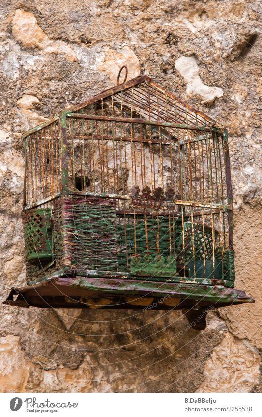 ausgeflogen alt Vogel leer Italien Sizilien Käfig Antiquität Vogelkäfig