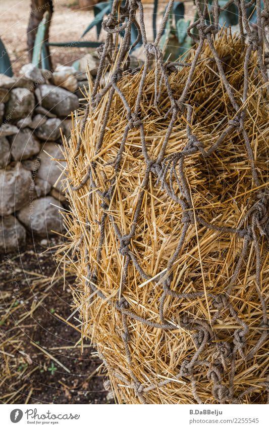 Das Heunetz wartet auf Kundschaft. Netz Tiere Futter Natur Außenaufnahme Menschenleer artgerechte Fütterung Fressen füttern braun Pferde Ziegen Stoh gelb