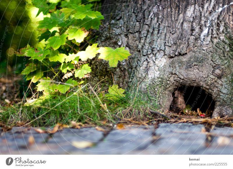 Schlupfloch Umwelt Natur Pflanze Sonnenlicht Sommer Schönes Wetter Baum Gras Sträucher Blatt Wildpflanze Baumrinde Loch Versteck grün Schutz Geborgenheit