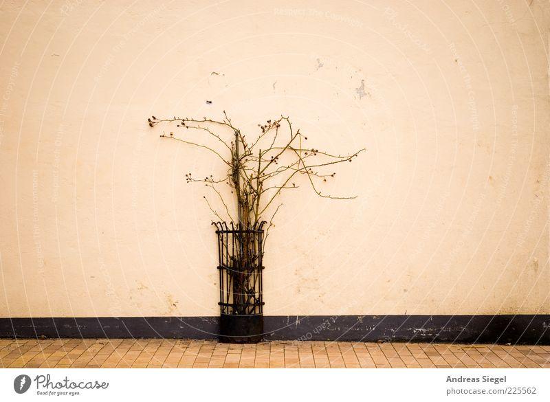 Tondern Natur Pflanze Wand Mauer Fassade Wachstum trist dünn Schutz Gitter Ranke Schutzgitter