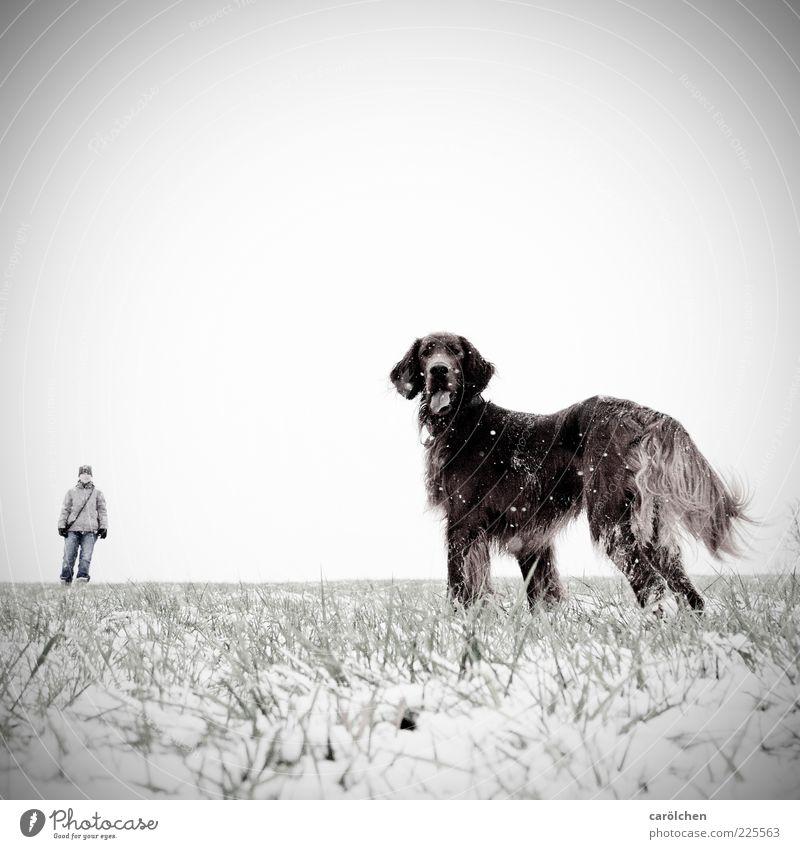 """""""Katze!"""" Mensch Hund Tier Wiese Schnee grau Schneefall braun Perspektive Wachsamkeit Haustier Blick Gassi gehen Größenunterschied Größenvergleich Irish Setter"""