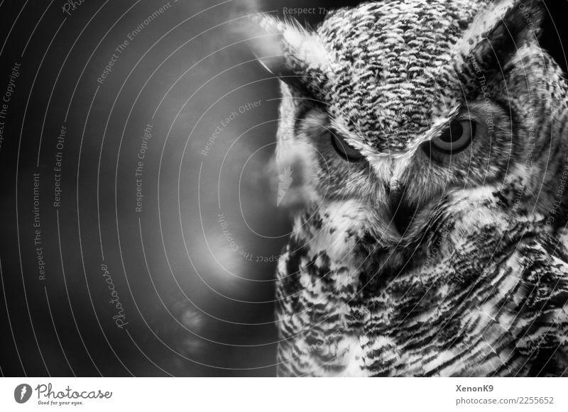 Strong Eyes Natur Wildpflanze Wildtier Vogel Tiergesicht Flügel 1 Tapferkeit selbstbewußt Coolness Optimismus Kraft Willensstärke Macht Mut Tatkraft Wachsamkeit