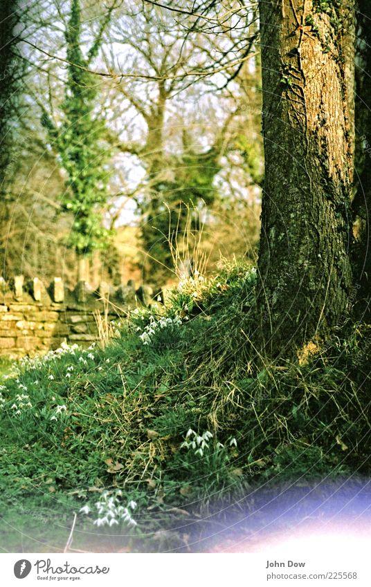 Glockenalarm II grün Baum Blume Wand Gras Frühling Mauer ästhetisch Wachstum Sträucher analog Baumstamm Schönes Wetter Moos England Surrealismus